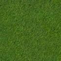 green-velvet-turf-150x150