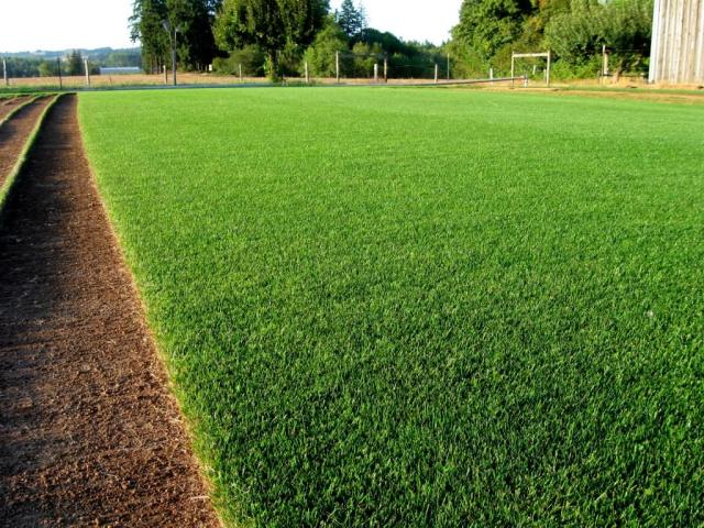 Stadium Turf Grass Seeds Greendale Turf